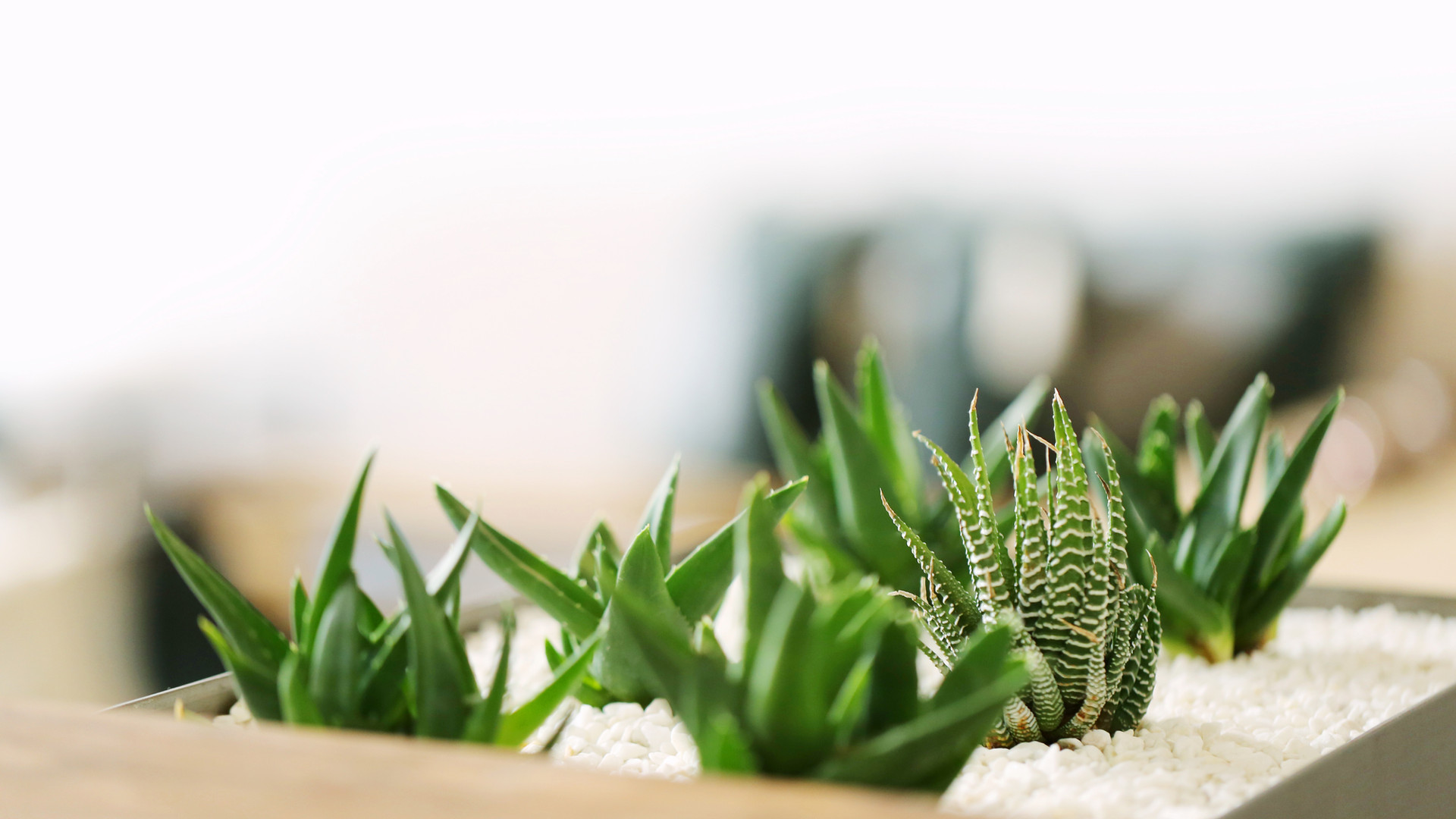 Pequenas plantas verdes