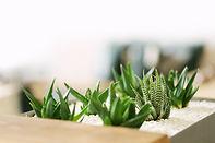 Kleine Grünpflanzen Sukkulent