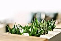 Malé zelené rostliny