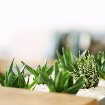How to Take Care of Your Succulents.