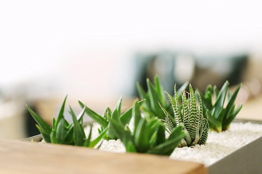Kleine Grünpflanzen