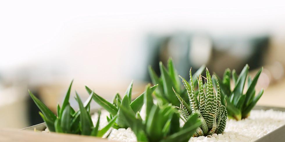 Organic Plant Sale May 1-June 6, 2021, m-sat 9-5, sun 9-3