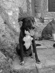 educateur canin ecole du chiot