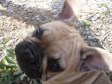 educateur canin obeissance ecole chiot