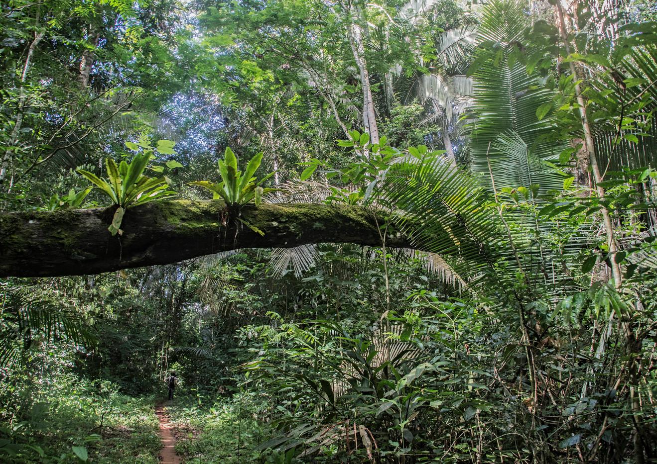 Ponte de Vegetar