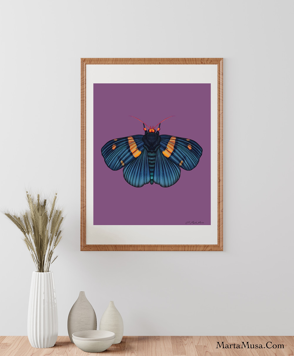 Contour line drawing of an African Peach Moth against a lavendar background.  The moth is shades of prussian blue on its wings and body with bands of yellow on its wings and a orange/yelow head and feelers