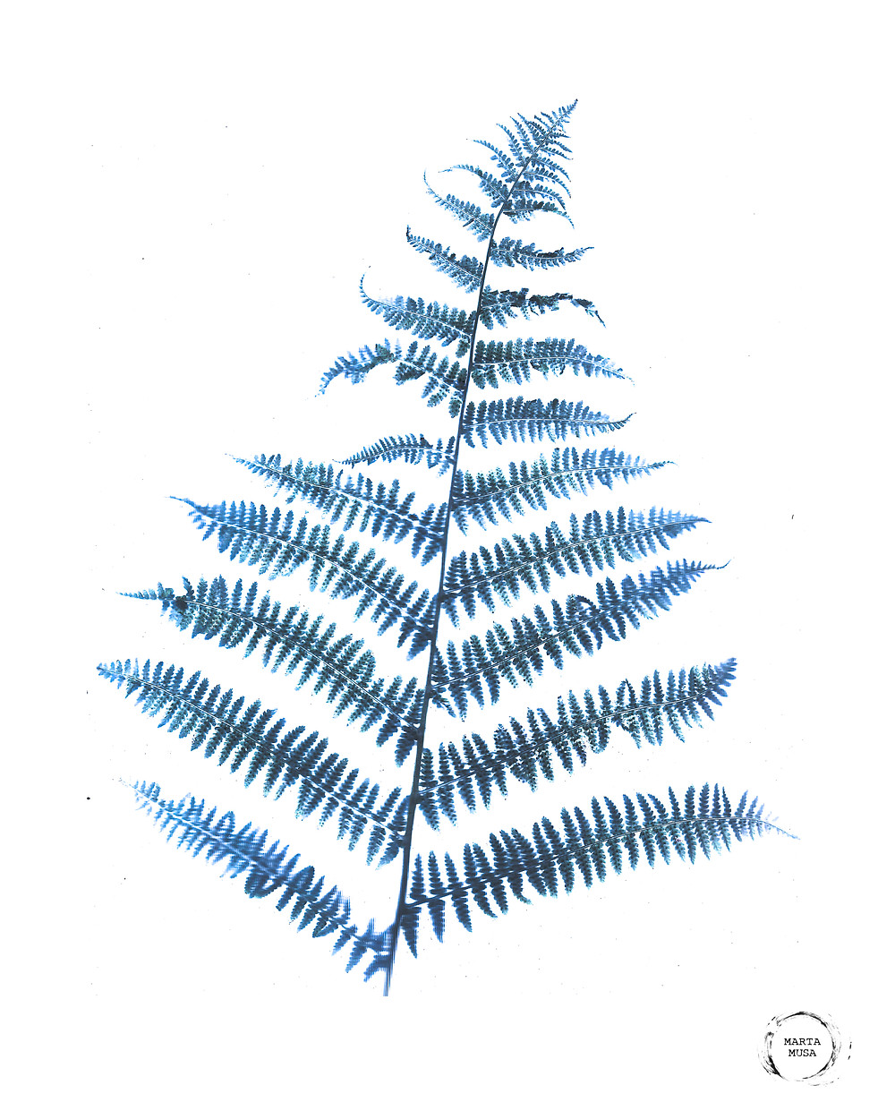 An image of a blue green fern branch on a white background