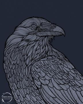 Tony the Crow