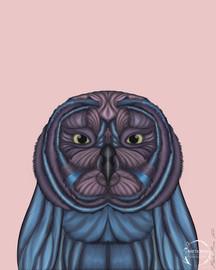 Owls Owls Everywhere