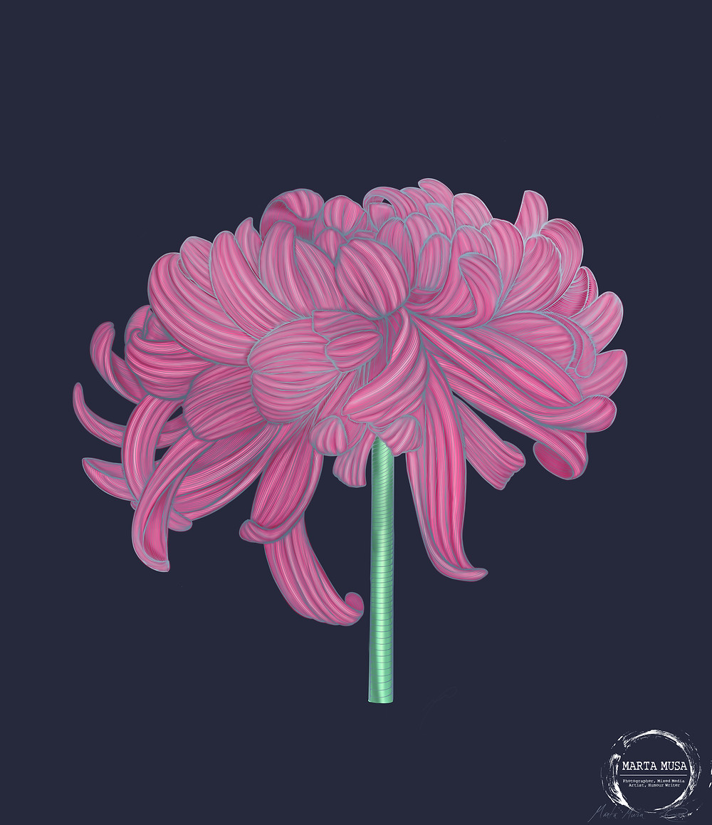 Contour line drawing of a Chrysanthemum.  The blossom is coloured in shades of pink and the stem is bright green.  The contour lines are coloured in shades of silver.