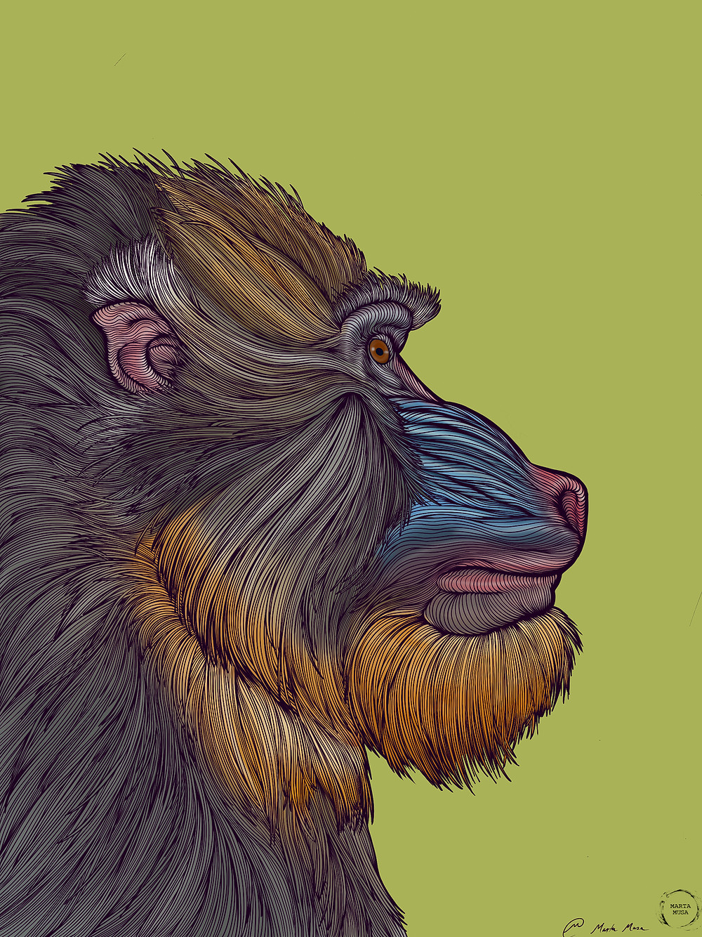 Contour drawing of a Mandrill in profile drawn against a lime green background