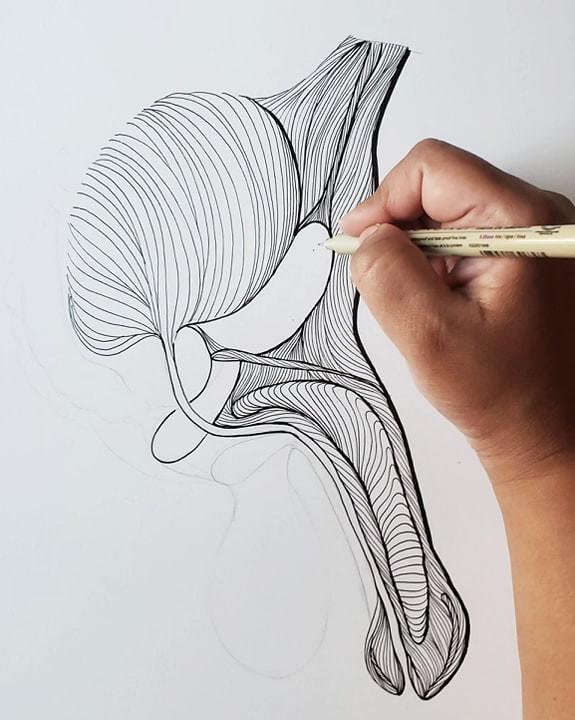 Hand illustrating Anatomy of Male Genetalia