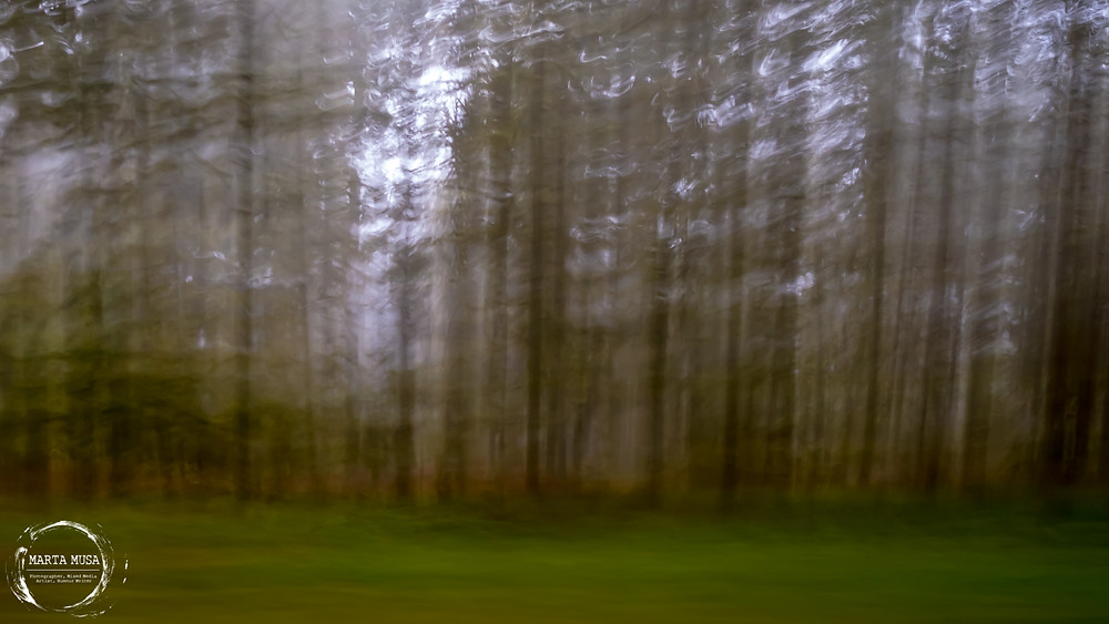A long exposure photograph of the forest from a moving car.  The ground is a smooth carpet of green and the trunks of the trees are all blurry brown streaks