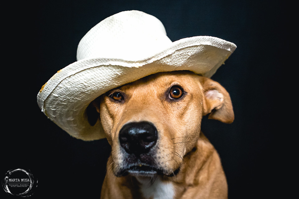 Fred a large red dog wearing a straw cowboy hat and staring into the camera