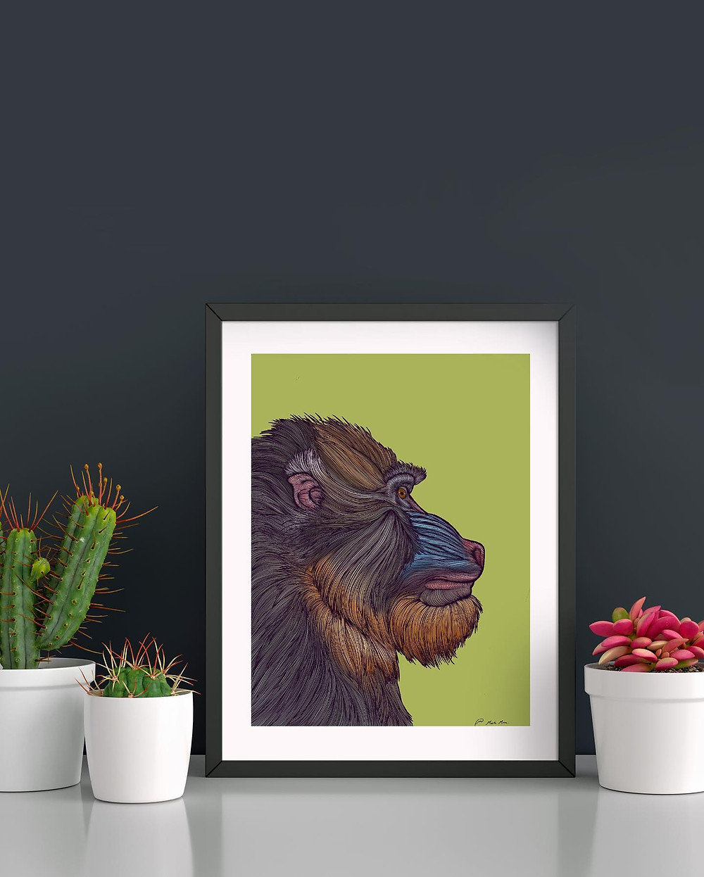 Countour line drawing of a Mandrill on a lime green background framed in a dark frame with a white border.  The frame is propped against a dard grey wall surrounded by white pots with succulents