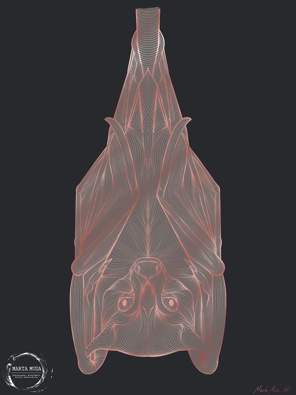 Contour LIne Drawing of an upside down Fruit Bat.  The illustration is against a dark blue background.  The lines of the bat are illustrated in a shiny light pink, The body of the Bat is coloured in a shiny light grey