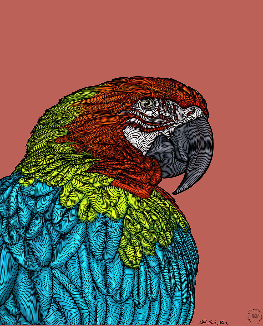 A contour line drawing of a brightly coloured Macaw in profile.