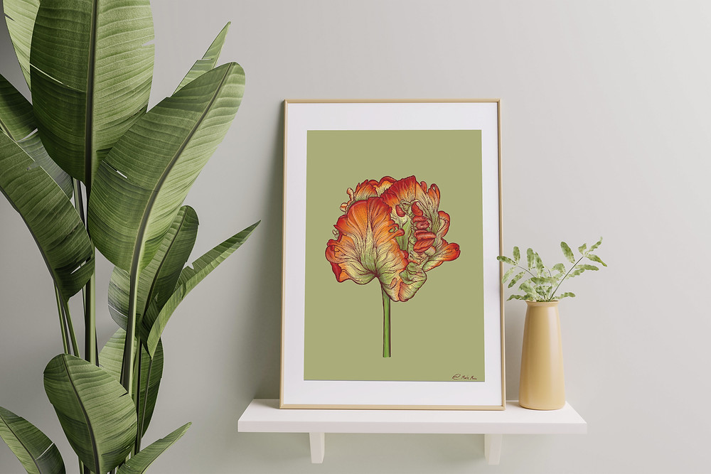 Contour drawing of a Ruffled Tulip in a large white Frame on a shelf with Banana plant to the left side of the frame