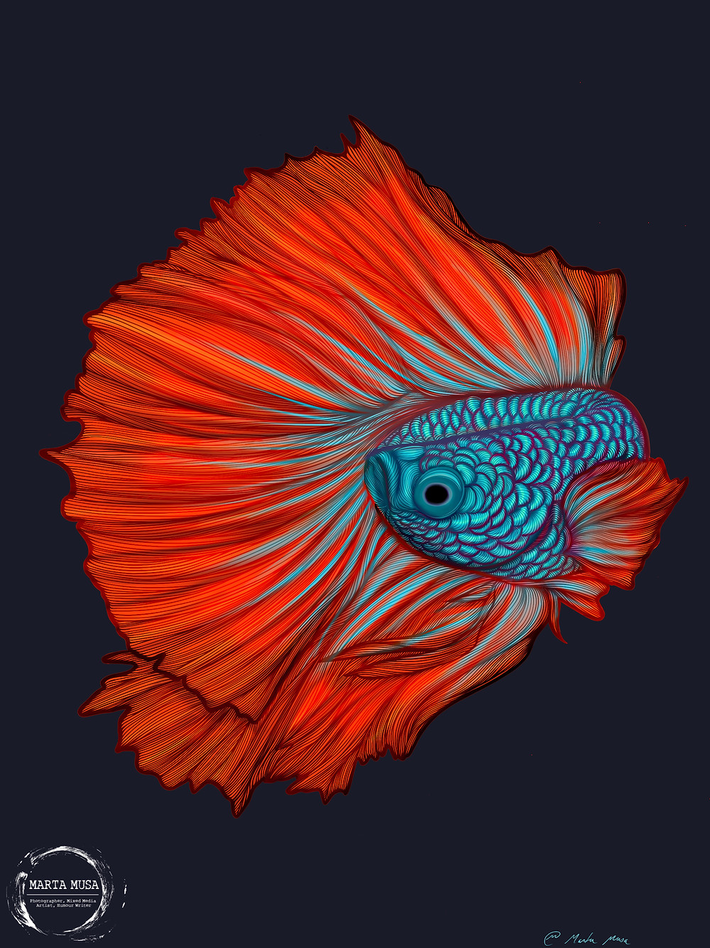 Contour line drawing of a Betta Fish against a dark blue background.  The body of the fish is coloured in a briliant turquoise with a gradient shifting to orange and red across the Betta Fish's fins.