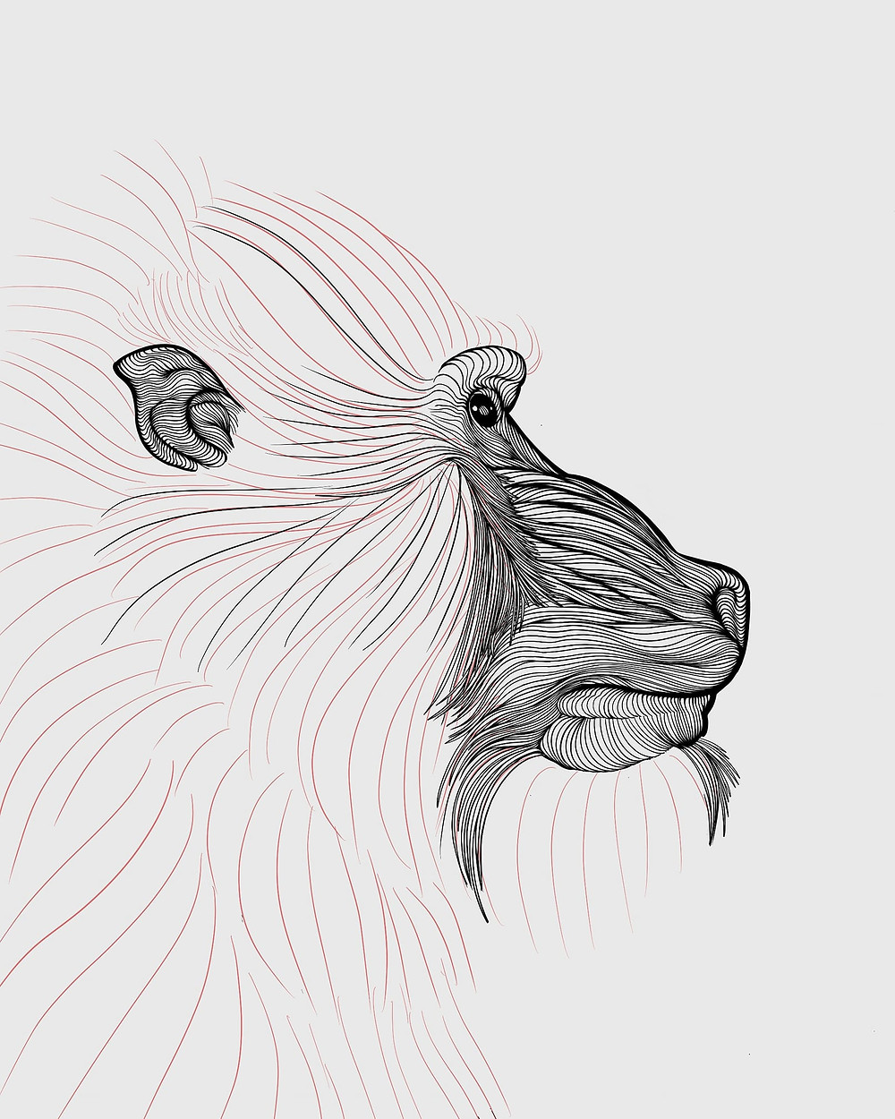 A work in progress of a Mandrill contour drawing.  The muzzle, eyes and ear are complete but the rest of the face is just outline.