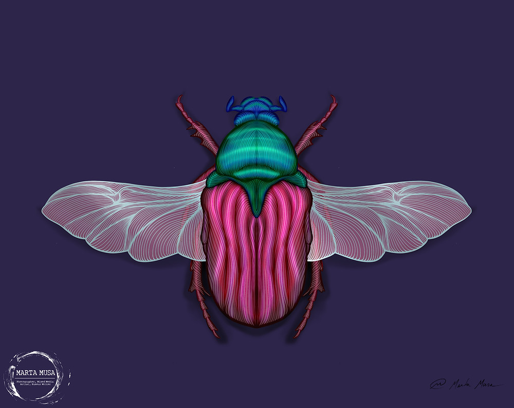Contour line drawing of a Jewel Beetle.  Creatively coloured in with a sapphinre head, emerald green thorax and pink abdomen, wings and legs.