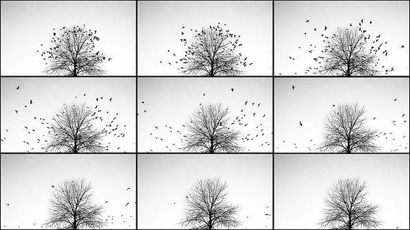 Corvidae 4 - Marta Musa Photography.jpg