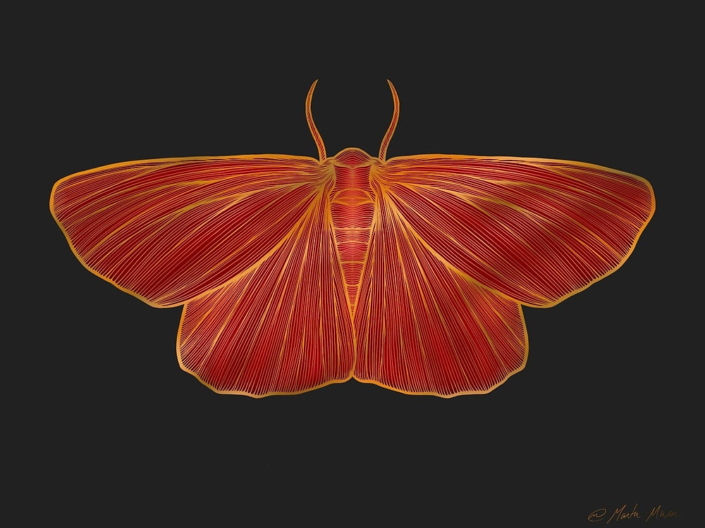 A line drawing of a symetrical moth viewed from above.  The contours of the moths wing and body are outline in gold lines while its entire body is painted in bright shades of warm reds and oranges.  The illustration is done on a Black background