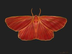 The Moth Won
