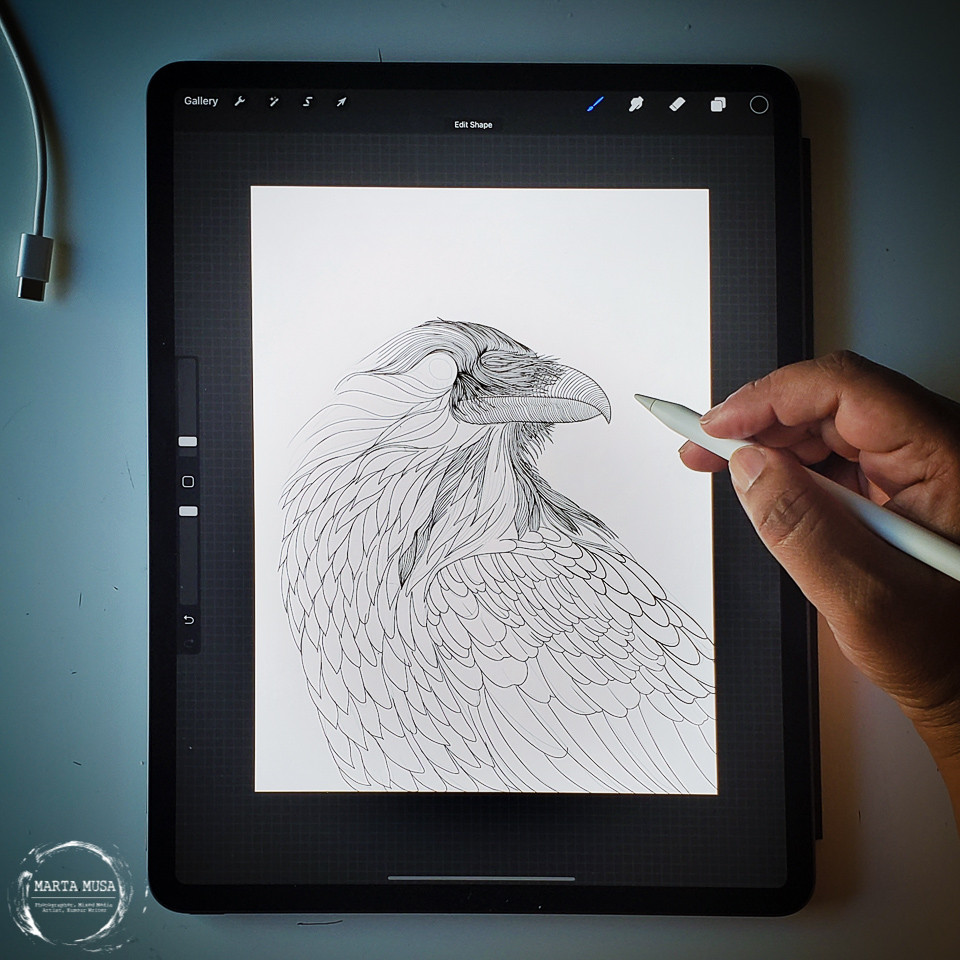 Picture of a black and wite digital illustration in progress on an Ipad Pro.  The partially outline illustration is of a Crow in profile.  There is a black womans hand holding an apple pen poised over the Ipad, as if mid illustration.