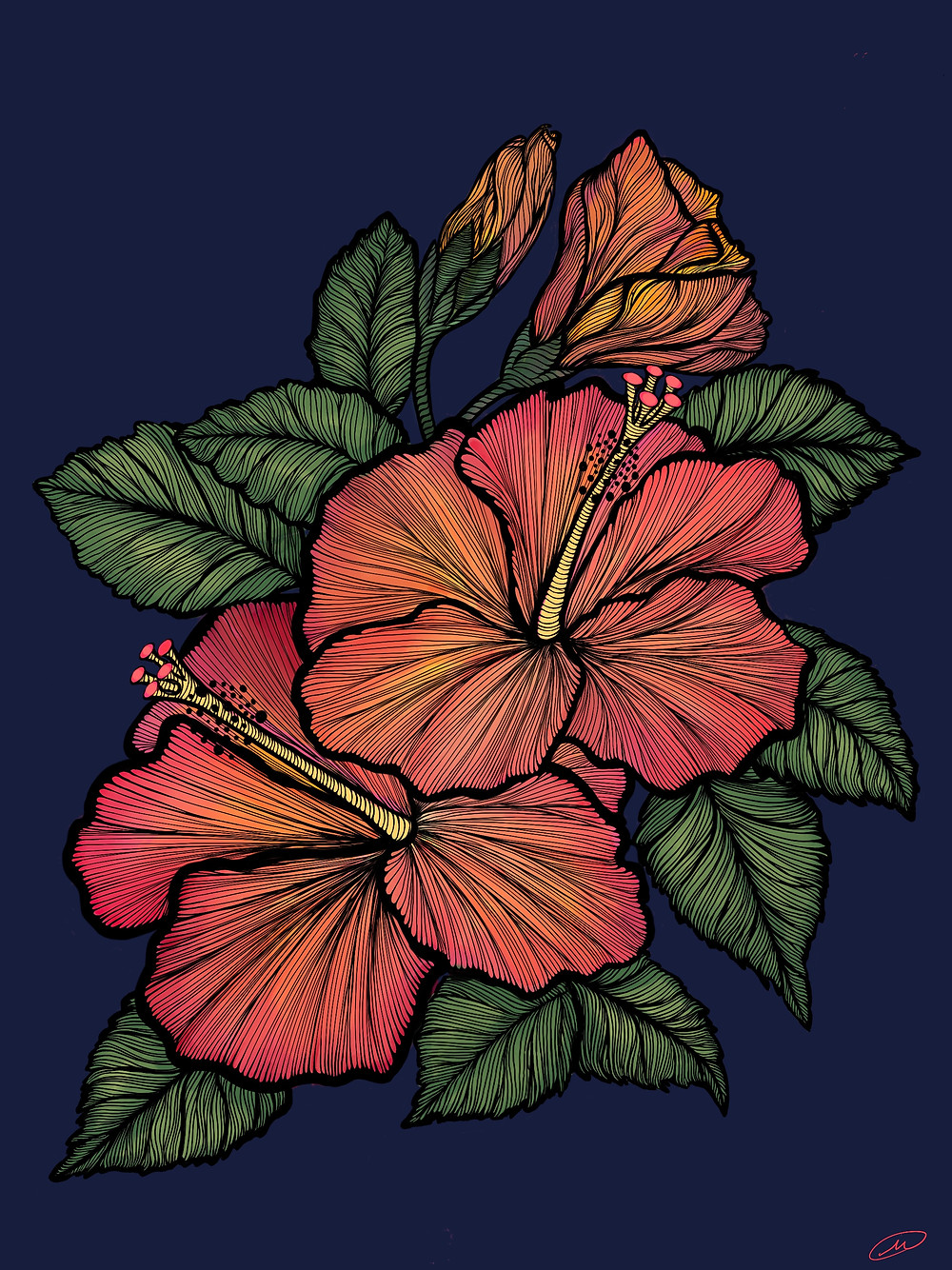 Line drawing of Orange Pink Hibiscus blossoms and green leaves on a dark blue background.  This is a digital illustration