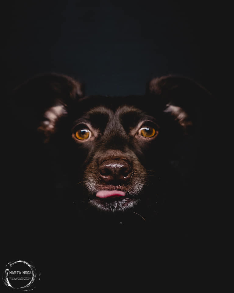 Carmela the dog portrait