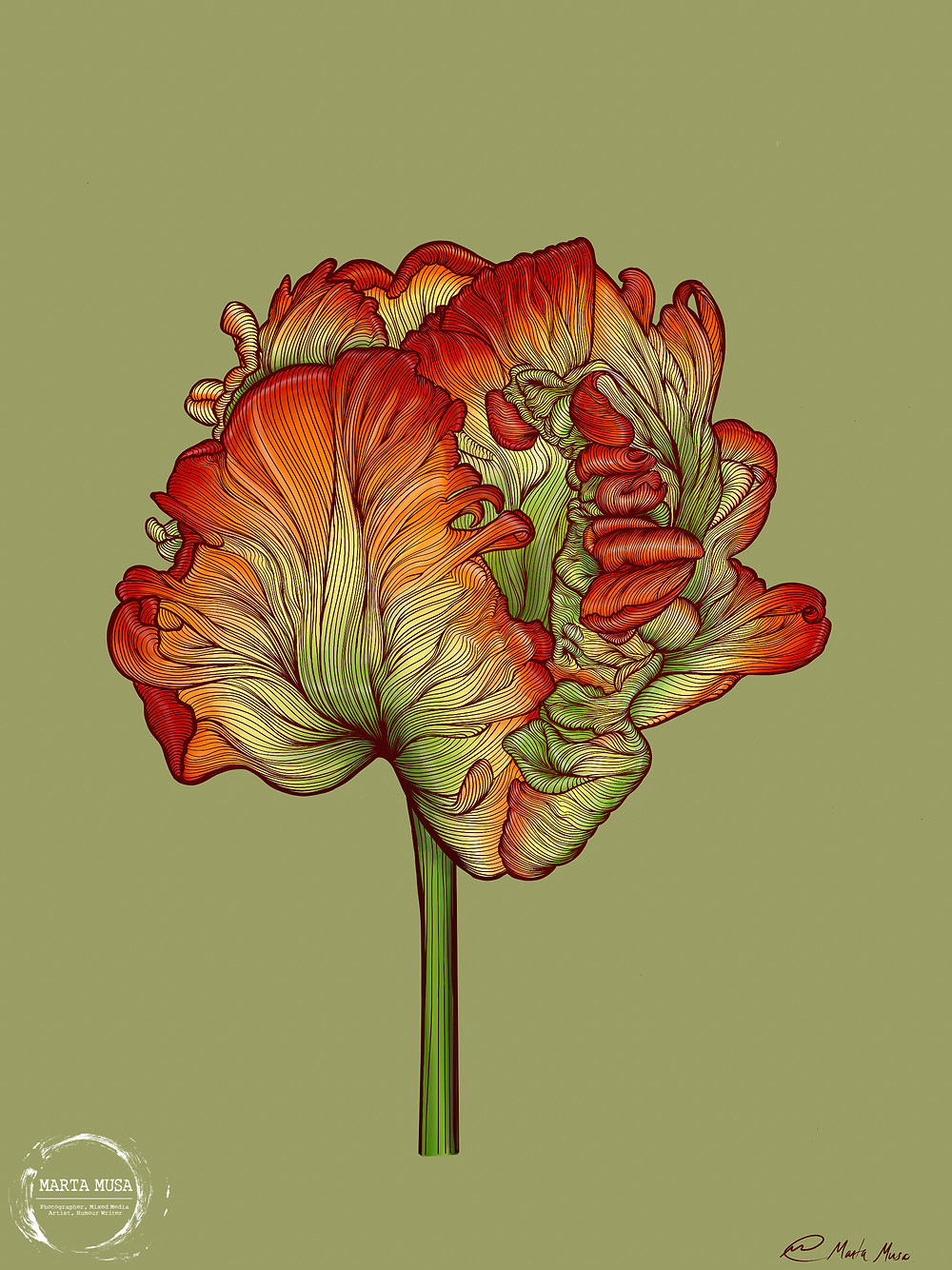 Contour line drawing of a single ruffled parrot tulip against a light olive green background.  The individual ruffled tulip pettals are painted in a gradient from light green at the base, to a bright light yellow, then bright orange, ending at the petal tips in a bright fiery red.  The tulip stem is green
