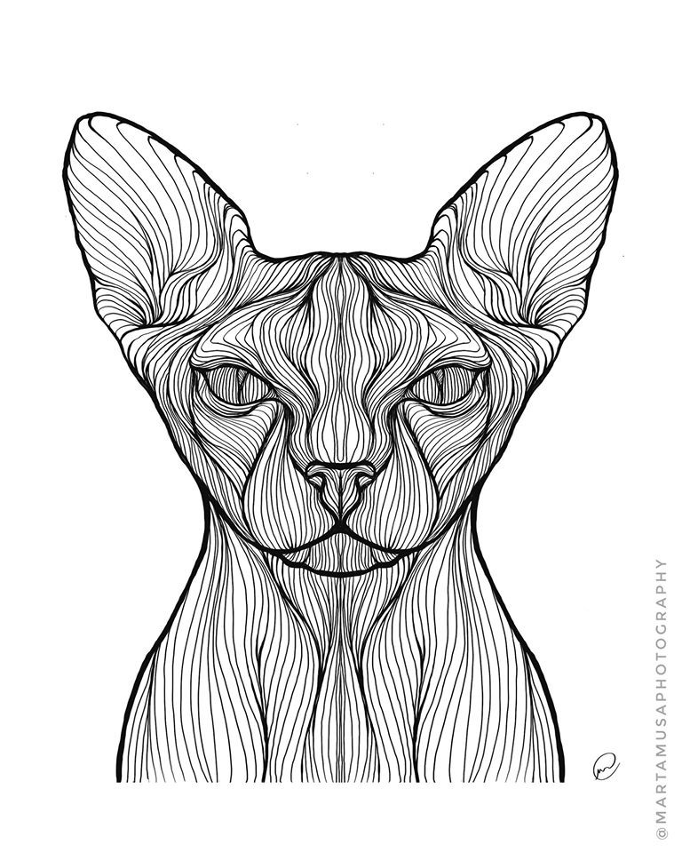 Contour line drawing of a Devon Rex Cat