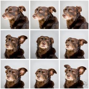 Puppy-razzi