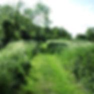 walk01.jpg