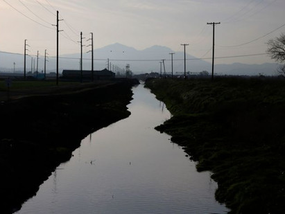 Editorial: Dead dogs and toxic fish: Welcome to Stockton, a city choking on California water policy