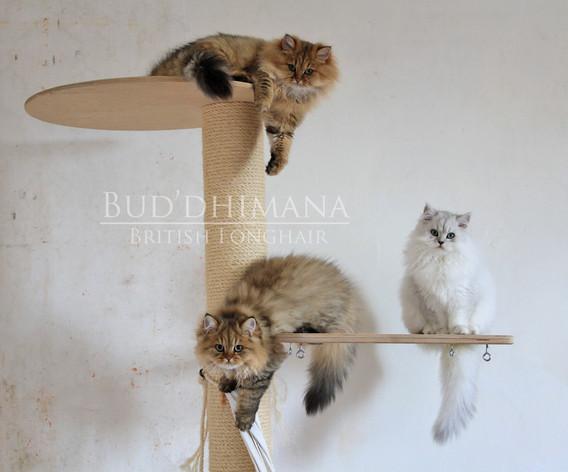 kitten2014.jpg