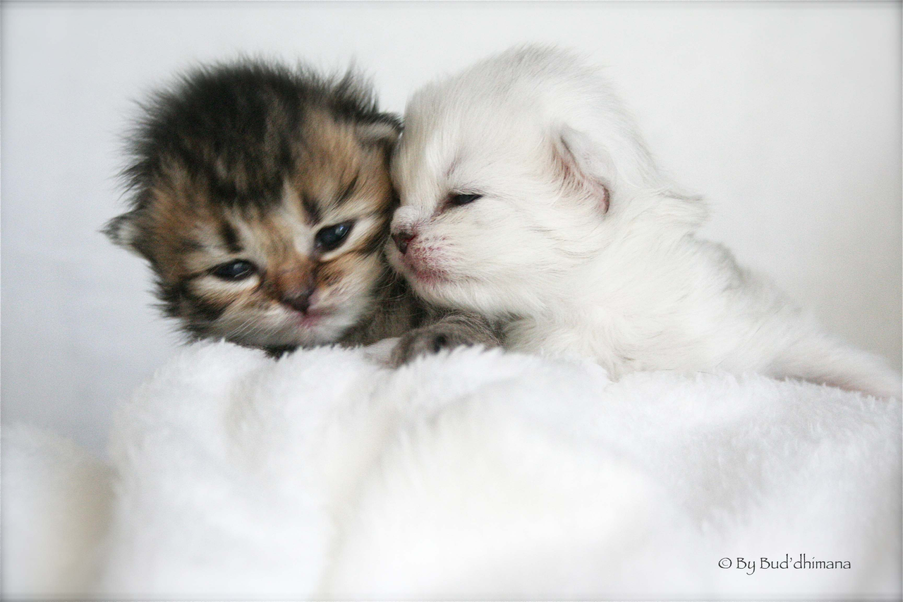 chatons2011-23.png