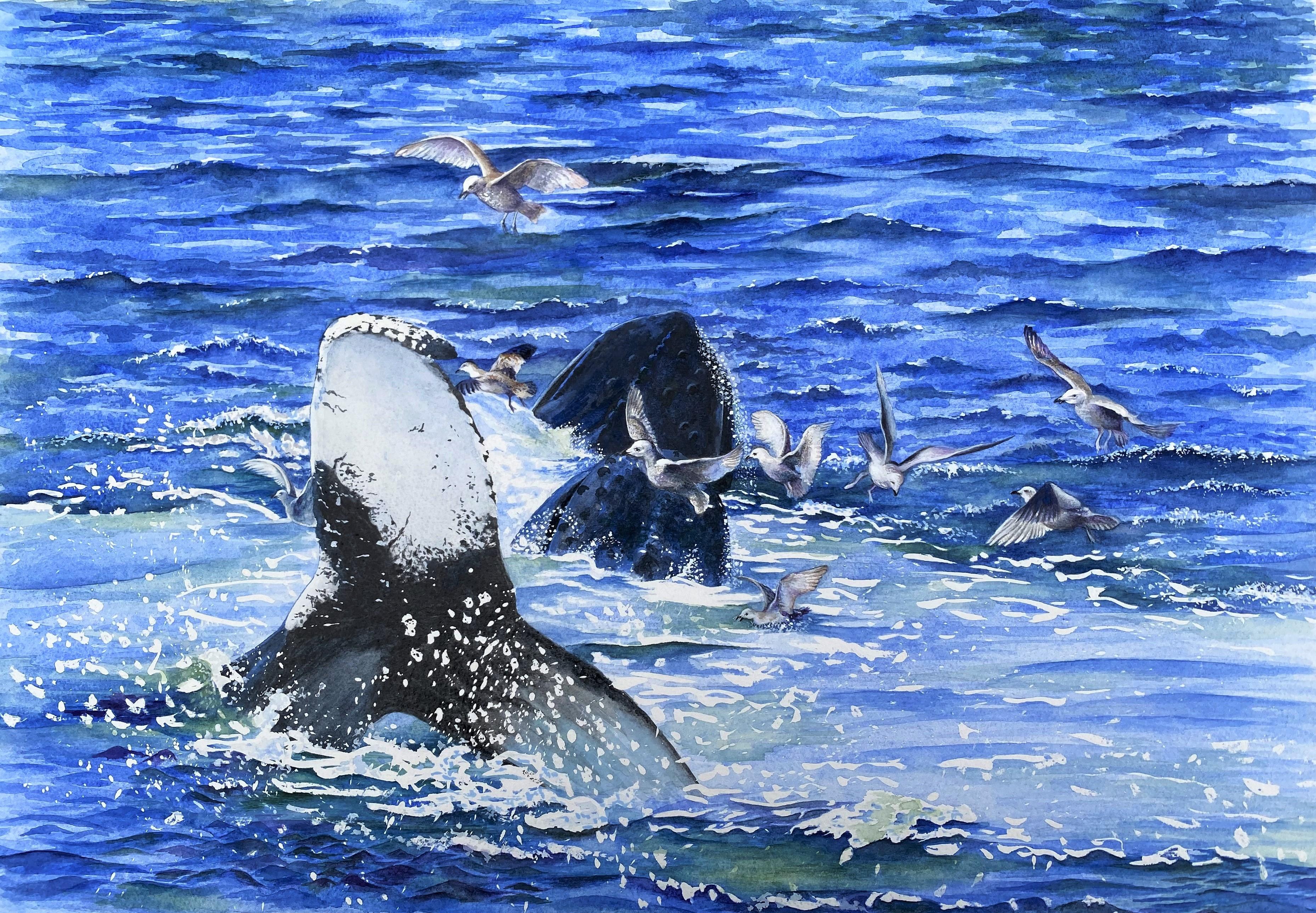 Whales Feeding off Barnstable, MA