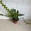 "Thumbnail: 4"" Fish Bone Cactus"