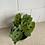 "Thumbnail: 4"" Prayer Plant Green"
