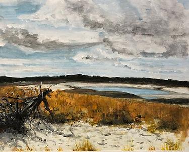 driftwood_wing island_brewster_marsh.jpg