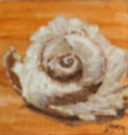 Moon Snail.jpg