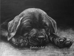 Steph's puppy