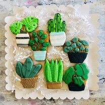Houseplant biscuits