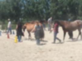 LDS group lead horses.jpg