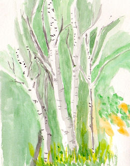 Aspen tree watercolor 1.jpg