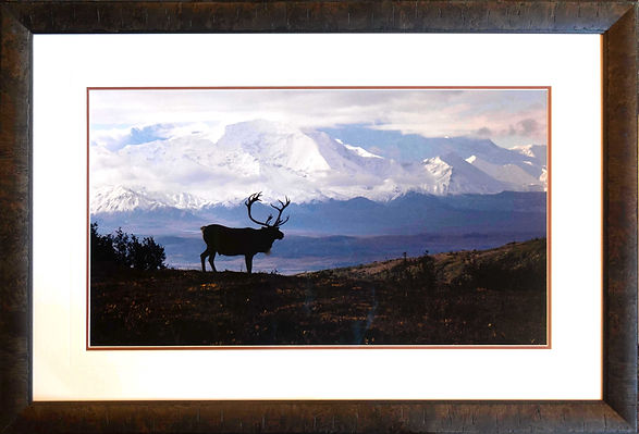 caribou country-00464 - Peter Overly.jpg