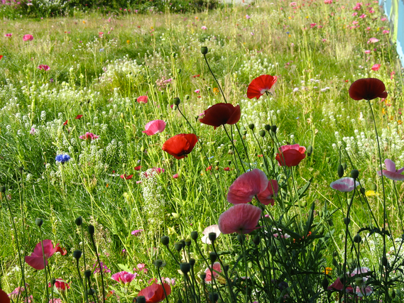 Wildflower Meadow - Private garden