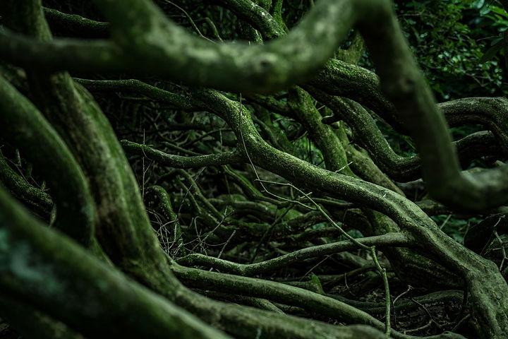 roots-4916519_1920.jpg